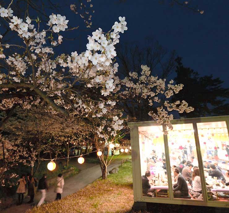 見頃を迎えた夜桜を楽しむ人たちが行き交う城山公園。名物の花見小屋もにぎわった=9日午後6時46分、長野市箱清水