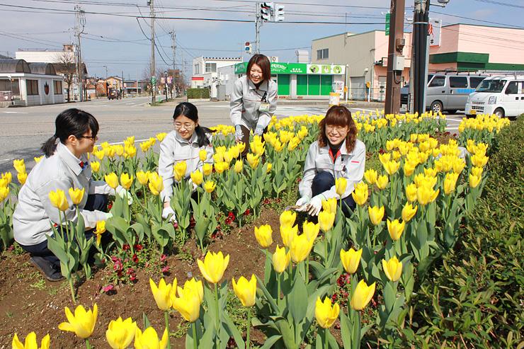 チューリップが咲き始めた国道156号沿いの花壇で除草する参加者