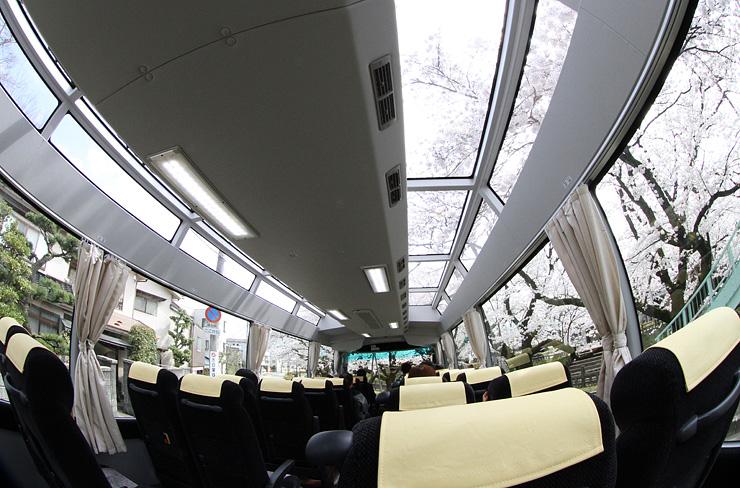 天井部分から桜が見えるパノラマバス=富山市内(魚眼レンズ使用)