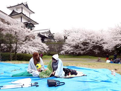 「花金」宴の準備 金沢城公園