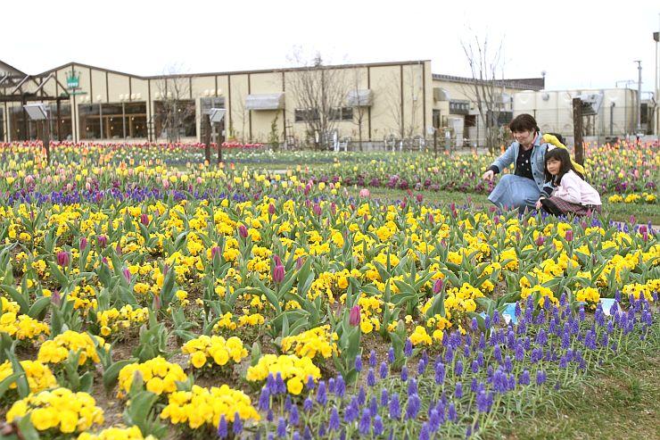 春季営業を始めた「いくとぴあ食花」のキラキラガーデン=11日、新潟市中央区