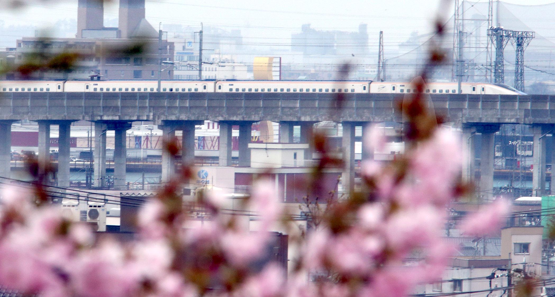 散り始めた桜越しに望む北陸新幹線=金沢市大樋町
