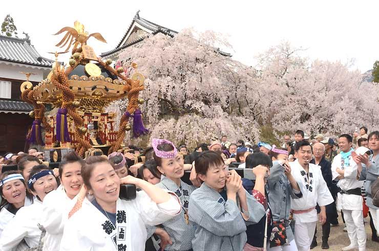 満開の桜の下、櫓門前でみこしを担ぐ女性たち