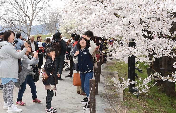 桜を前に記念撮影を楽しむ花見客