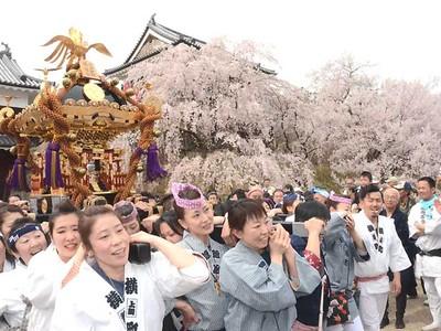 千本桜に赤備え...上田盛況 城跡公園「まつり」