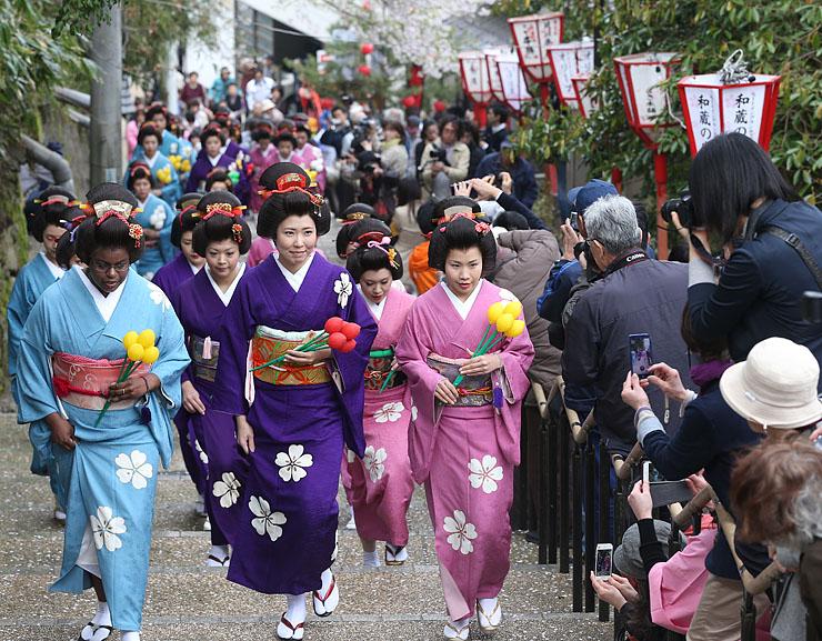 散り始めた桜並木を歩く女性たち=氷見市中心部