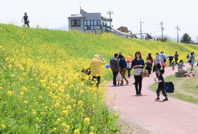 さばえ菜花まつりの会場をのんびりと散歩する人々=18日、鯖江市小黒町2丁目の日野川河川敷