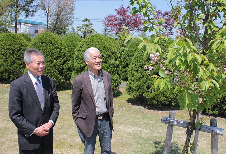 花が開き始めたツルギオリトキクザクラを見守る(右から)武田さん、山口館長=西田美術館