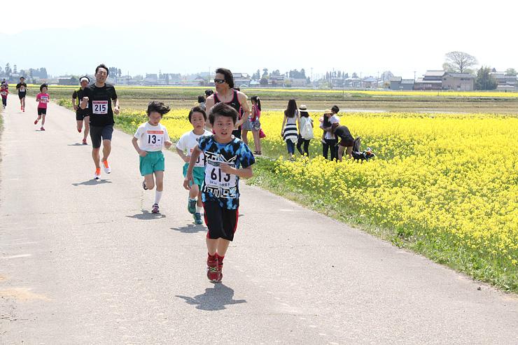 菜の花畑沿いのコースを走るマラソン大会の参加者=高岡市戸出西部金屋