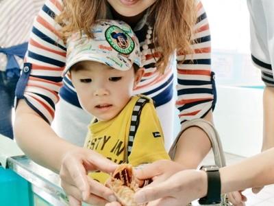 オオグソムシにタッチ! 越前松島水族館でGW特別イベント