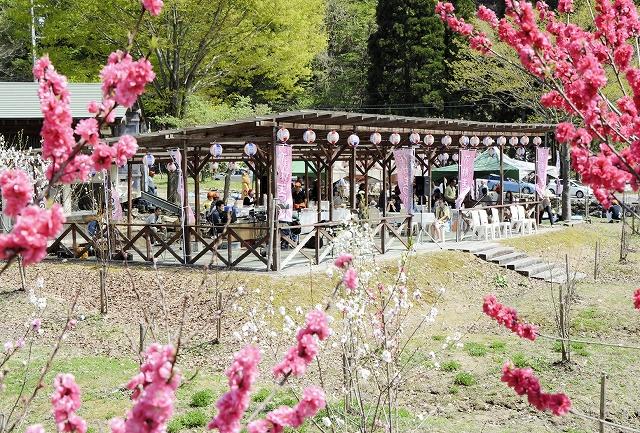住民たちが植えたハナモモを観賞してもらおうと開かれた集い=2日、福井県大野市下山
