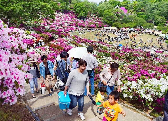 公園を彩る満開のツツジを楽しむ家族連れら=3日、福井県鯖江市西山公園