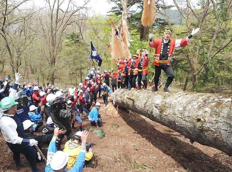 「春宮一之御柱」が倒れ、奥山に声を響かせる木やり衆たち=12日、下諏訪町の東俣国有林