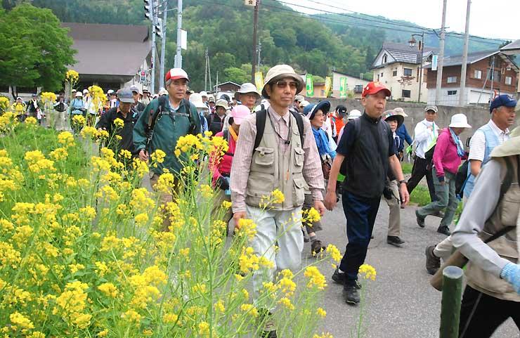 村内を歩く「野沢温泉菜の花パノラママーチ」の参加者=9日
