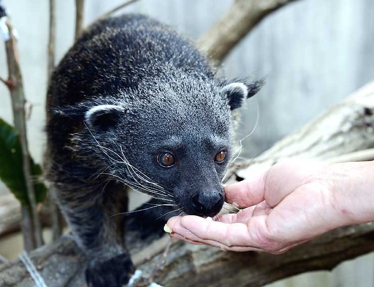 長野市茶臼山動物園が一般公開を始めたビントロング