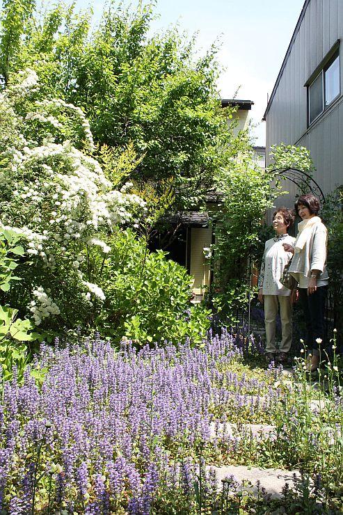 紫色のジュウニヒトエが咲きそろった裏庭=加茂市