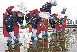 苗を植える小中学生=19日午前10時半、能美市吉原町