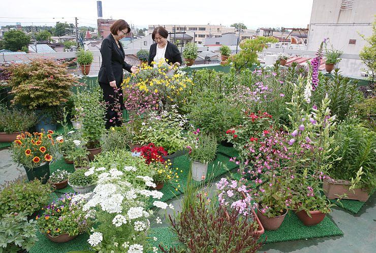 色とりどりの花が咲く内山千代子さん宅屋上の庭=19日、上越市本町5