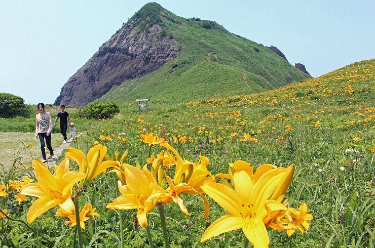一面に黄色い花を咲かせるトビシマカンゾウ=27日、佐渡市願の大野亀