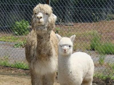 胎内・樽ケ橋遊園の動物 空前のベビーブーム 職員「かわいい姿早く見て」