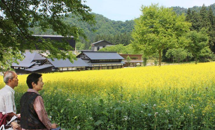 1万平方メートルの斜面を黄色に染める菜の花=29日、南魚沼市長森
