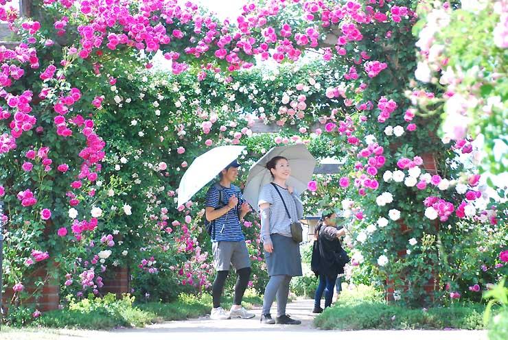 トンネル状に仕立てたバラの中を散策する観光客ら=1日