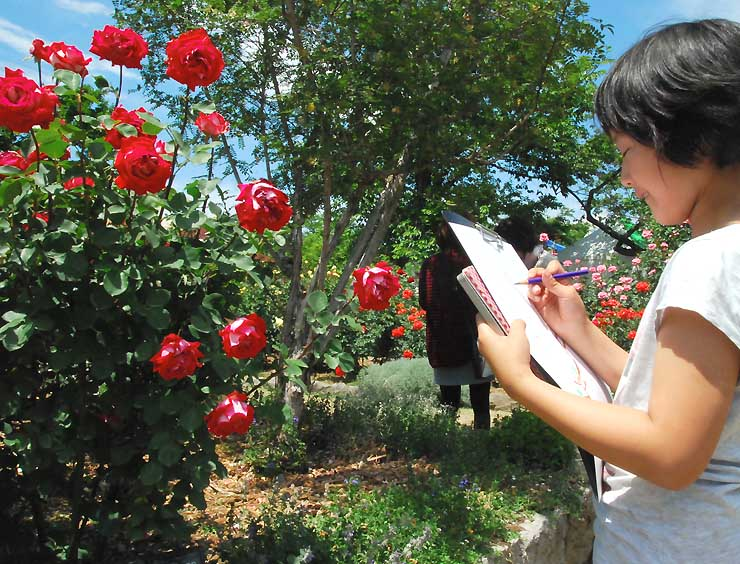 色鉛筆でバラを写生する児童=31日
