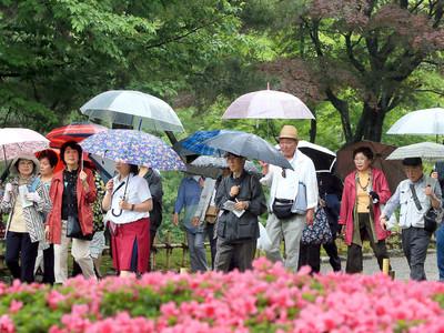 兼六園しっとり 石川県内は弱い雨