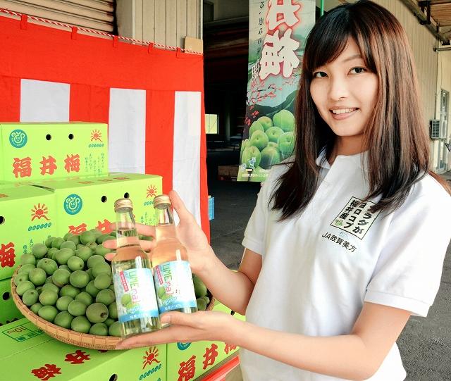 JA敦賀美方と県経済連が共同開発したウメラルサイダー=4日、福井県若狭町成出