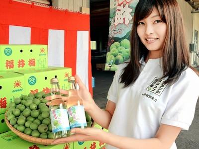 福井梅サイダー さわやかで甘い味わい JA敦賀美方など開発