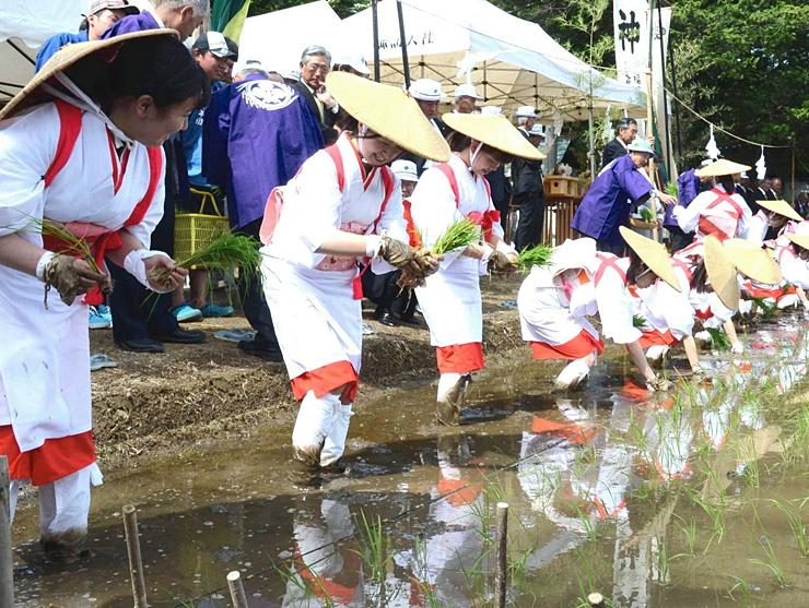 白装束を身にまとい、横一列に並んで苗を植える早乙女たち