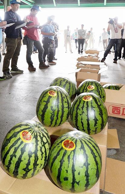 本県産スイカ1400玉が並んだ初競り=9日、福井市中央卸売市場
