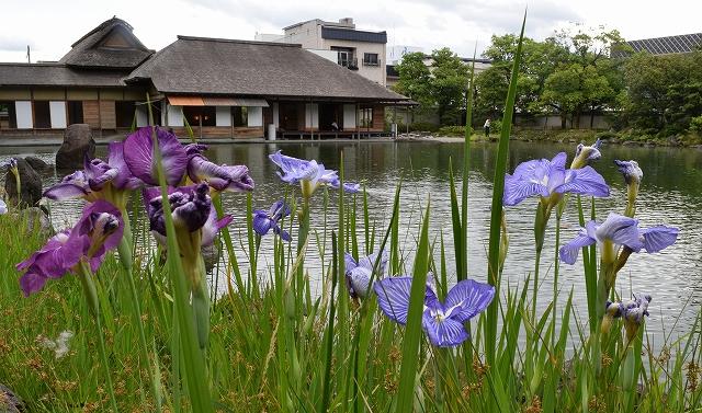 「雨」の日に入園すると7月以降に無料入場できるクーポンを配布している養浩館庭園=福井市宝永3丁目