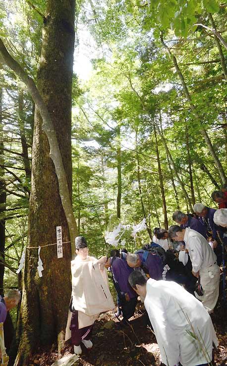 本見立てで「本宮一之御柱」が決まり、神事に臨む大総代ら=10日、辰野町の横川国有林