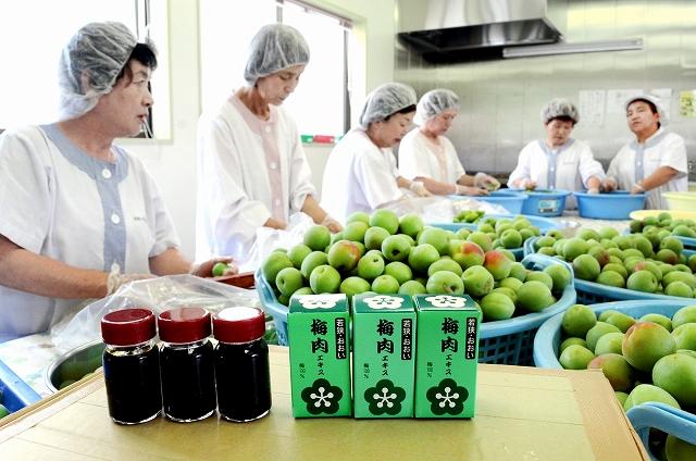 梅肉エキス作りに励むおおい夢工房のメンバー=15日、福井県おおい町本郷の加工場