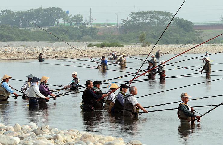 アユ釣り漁が解禁され、川の中に入ってさおを並べる愛好者=高岡市戸出石代の庄川左岸