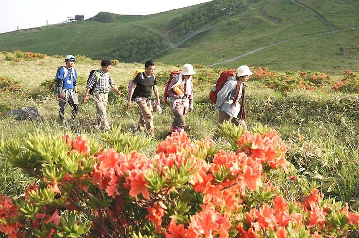 レンゲツツジが咲く高原を歩く「霧ケ峰・美ケ原中央分水嶺トレイル踏破ツアー」の参加者=25日午後4時47分、茅野市と諏訪市境の車山高原