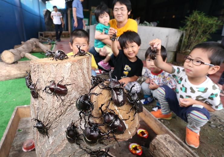 カブトムシに歓声を上げる子どもたち=昆虫王国立山