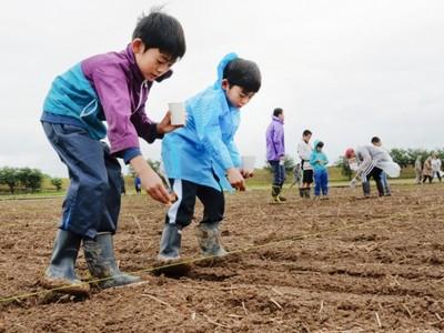 コスモスの花の巨大迷路復活へ 10月、福井でお披露目