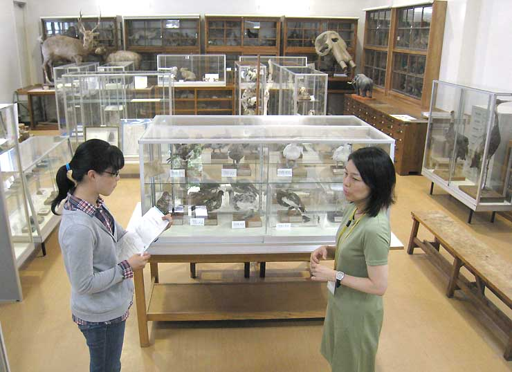 定期開館を始めた信州大自然科学館の総合展示室