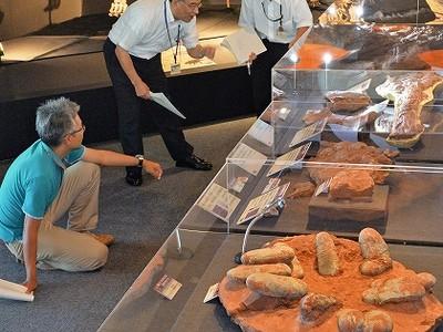 南アジアの恐竜勢ぞろい、博物館で特別展開幕 世界初公開の標本も多数紹介