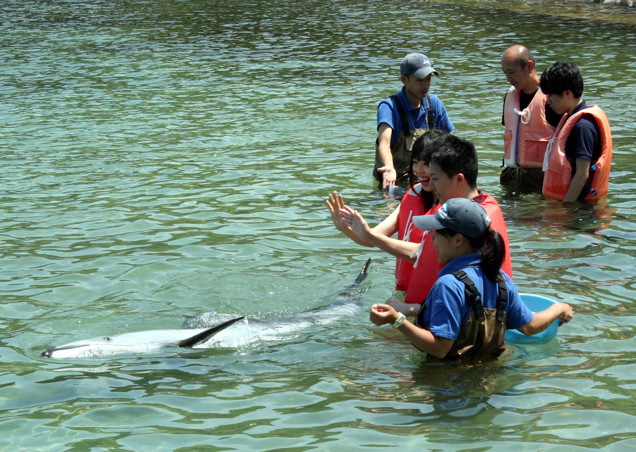 イルカと触れ合う参加者=15日午前11時10分、七尾市ののとじま臨海公園水族館