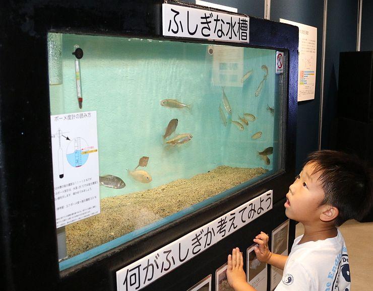 淡水魚と海水魚が一緒に泳ぐ「ふしぎな水槽」=新潟市中央区