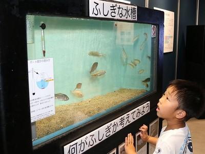 海水魚 淡水魚 混泳不思議だね マリンピアで特別展示