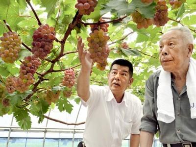福井県産ブドウ「ふくぷる」甘さ良し 小浜で生産者ら目ぞろえ会