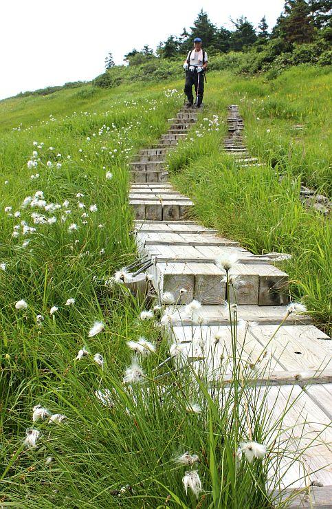 高山植物の花々が見頃を迎えた巻機山9合目付近=5日、南魚沼市
