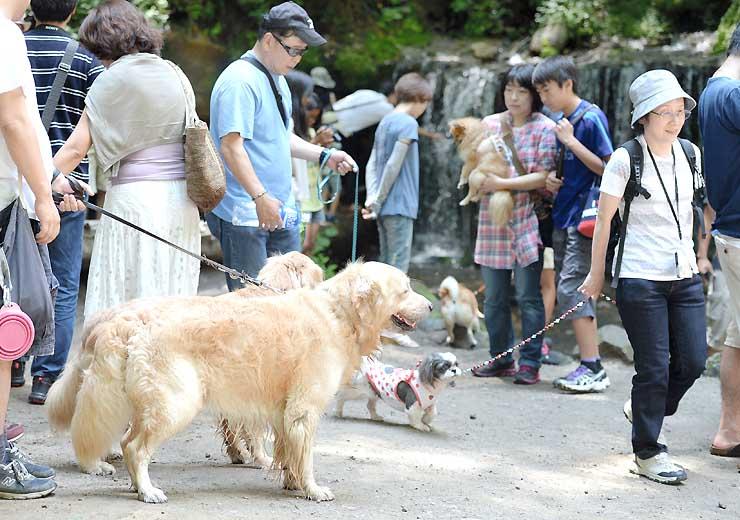 観光名所「白糸の滝」には愛犬とともに涼を求めて散策する大勢の観光客が訪れていた=3日、軽井沢町