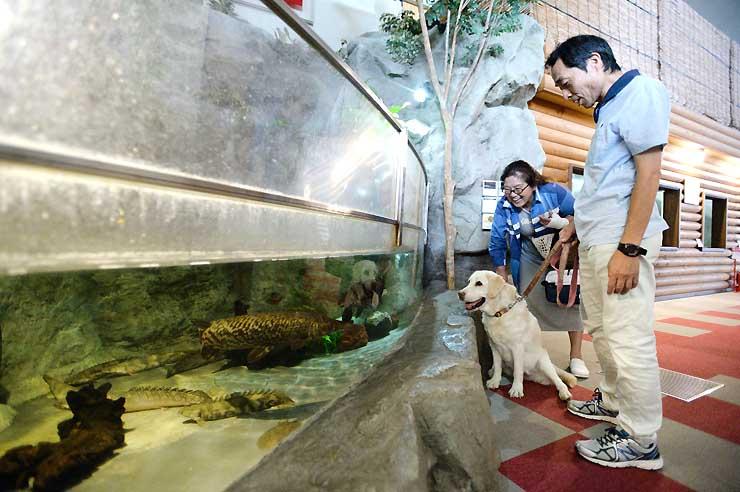 ペットと入館できる「蓼科アミューズメント水族館」。屋外にはドッグランも併設している=7日、茅野市北山