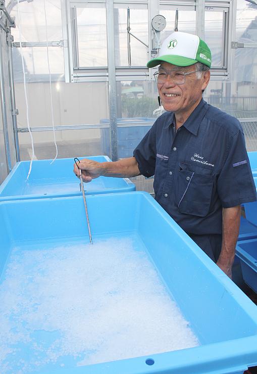 ビニールハウスで深層水の温度を測り、結晶の出来を確かめる神凉さん