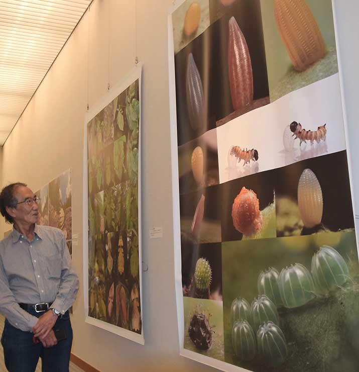 チョウの卵を撮影した作品を見る海野さん